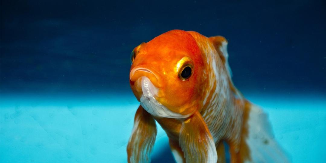 fish-bowl